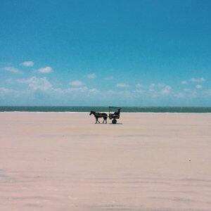 Ilha do Algodoal. Fonte: @arashida
